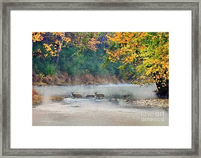 Deer Crossing River Framed Print by Dan Friend