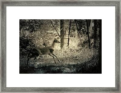 Deer Crossing Framed Print