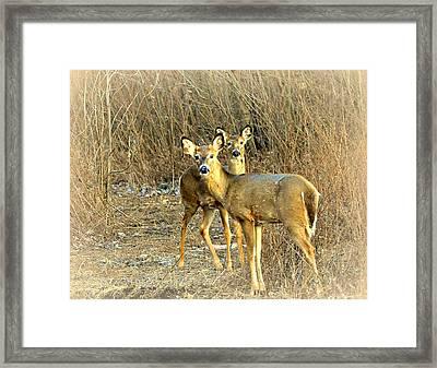 Deer Duo Framed Print by Marty Koch