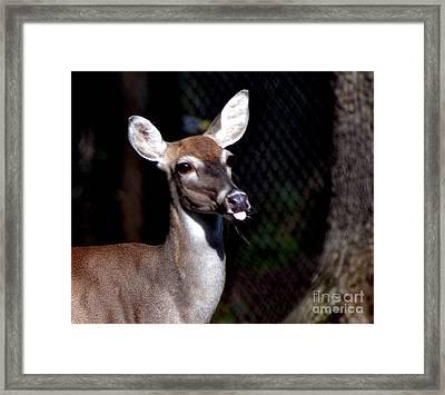 Deer Giving Raspberries Framed Print by Eva Thomas
