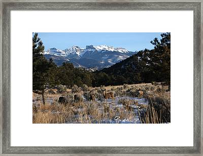 Framed Print featuring the photograph Deer Herd by Marta Alfred