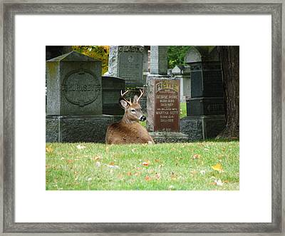 Deer In Cemetery Framed Print