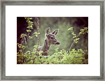 Deer In Forest Framed Print by Christopher Kimmel