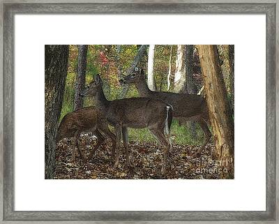 Framed Print featuring the photograph Deer In Forest by Lydia Holly
