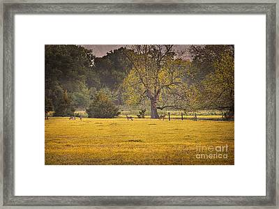 Framed Print featuring the photograph Deer In Spring Meadow by Cheryl Davis