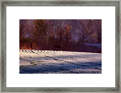 Deer In The Distance Framed Print by Jake Busby