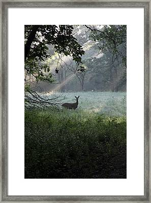 Deer In The Mist Framed Print