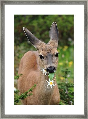 Deer In The Wild Flowers Framed Print by Pierre Leclerc Photography