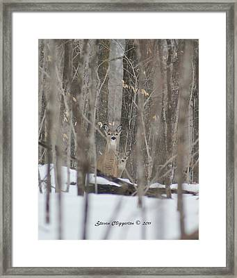 Framed Print featuring the photograph Deer In Woods by Steven Clipperton