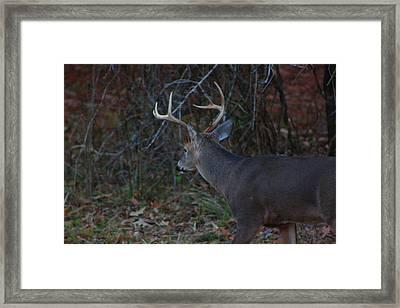 Deer Framed Print by Jake Busby