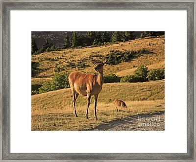 Deer On Mountain 2 Framed Print by Pixel Chimp