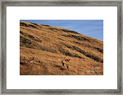 Deer On Mountain 3 Framed Print by Pixel  Chimp