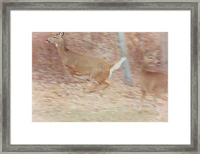 Deer On The Run Framed Print by Karol Livote