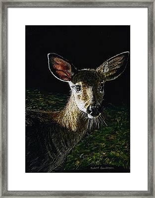 Deer Portrait Framed Print by Robert Goudreau