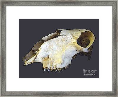 Deer Skull Framed Print by Renee Trenholm