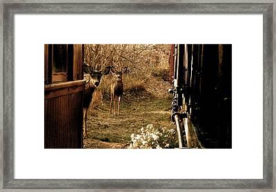 Deer Train Yard In Golden Framed Print by Travis Burns