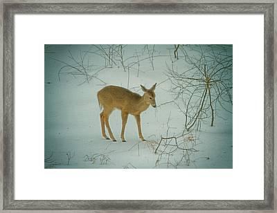 Deer Winter Framed Print by Karol Livote