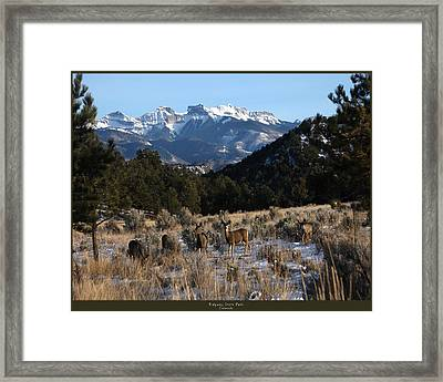 Framed Print featuring the photograph Deer With Cimmaron Mountain Backdrop by Marta Alfred