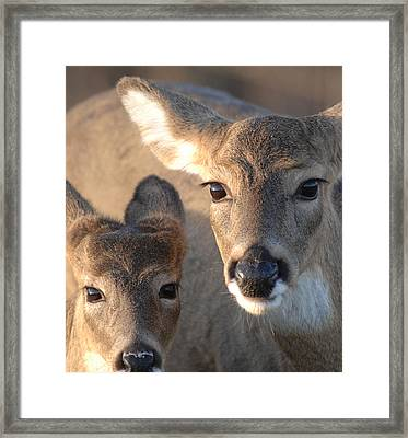 Deer With Young Framed Print