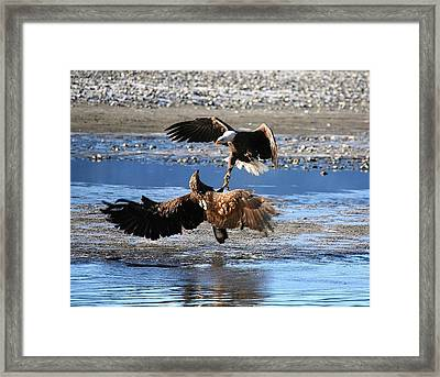 Framed Print featuring the digital art Defending Territory by Carrie OBrien Sibley