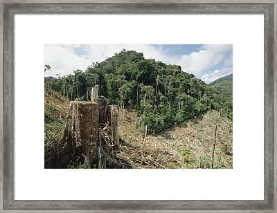 Deforested Hillside Of Wet Montane Framed Print