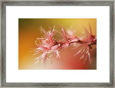 Delicacy. Natural Wonders. Macro Framed Print by Jenny Rainbow