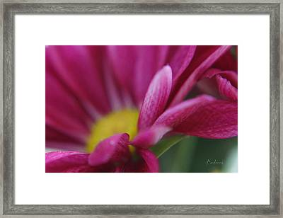Delicacy Framed Print by Robin Lewis