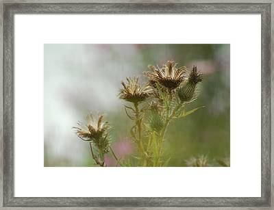 Framed Print featuring the photograph Delicate Balance by Tam Ryan