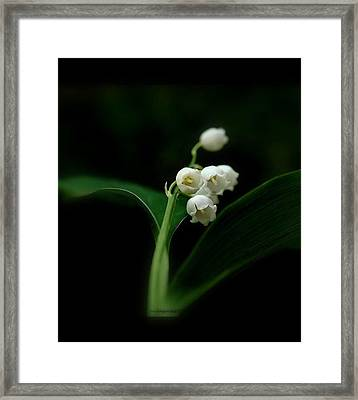 Framed Print featuring the photograph Delicate Beauty by Marija Djedovic