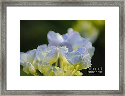 Delicate Bloom Framed Print by Tamera James