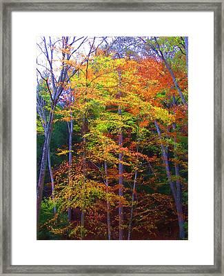Delicate Colors Framed Print by Vijay Sharon Govender