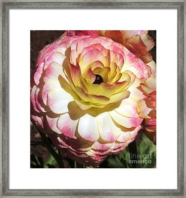 Delicate Delight Framed Print