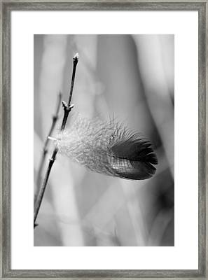 Delicate Feather Framed Print by Rick Rauzi