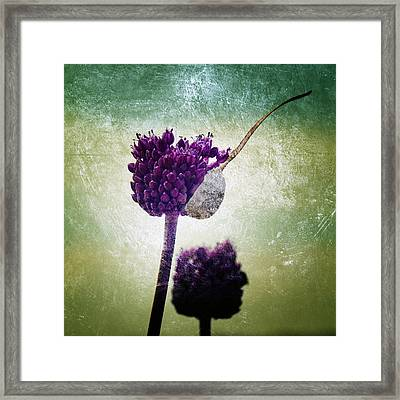 Delicate Framed Print by Stelios Kleanthous