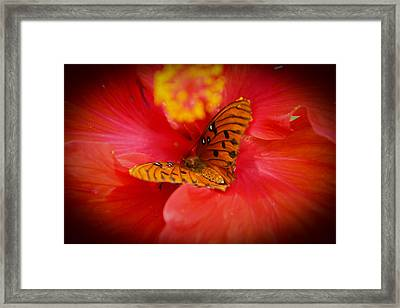 Delicate Visitor Framed Print by Theresa Johnson
