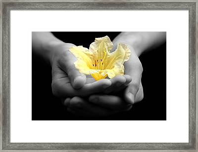 Delicate Yellow Flower In Hands Framed Print