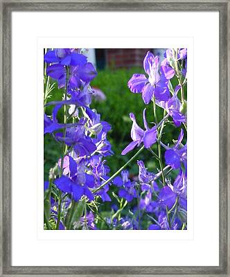 Framed Print featuring the photograph Delicately Blue by Frank Wickham