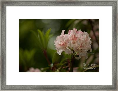 Delicately Peach Framed Print by Mike Reid