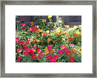 Delicious Framed Print by Elizabeth  Sullivan