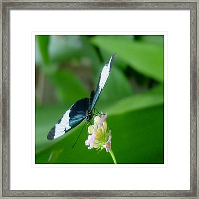 Framed Print featuring the photograph Delicious by Frank Wickham