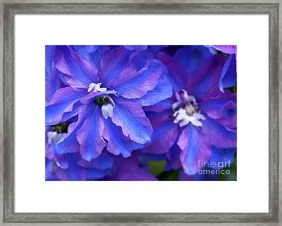 Delightful Delphinia Flowers Framed Print by Sabrina L Ryan