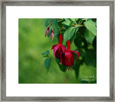 Delightful  Framed Print by Inspired Nature Photography Fine Art Photography