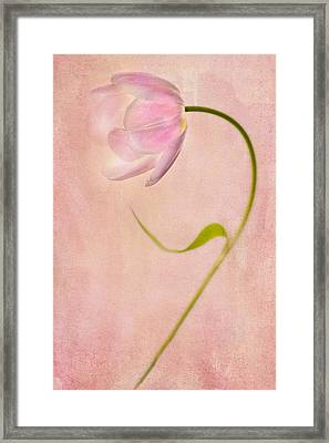 Delightful Framed Print by Rebecca Cozart
