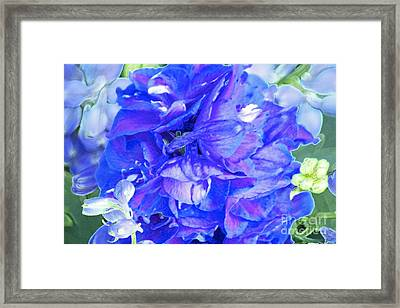 Delphinium Blue Framed Print by Gwyn Newcombe