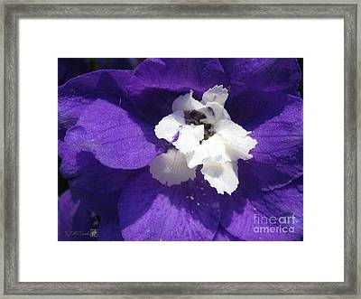 Framed Print featuring the photograph Delphinium Named Blue With White Bee by J McCombie