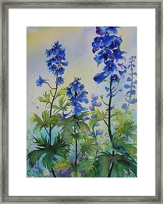 Delphiniums Framed Print