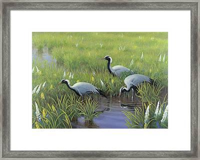 Demoiselle Cranes In Spring Framed Print by Jon Janosik