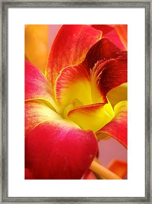 Dendribium Malone Or Hope Orchid Flower Framed Print