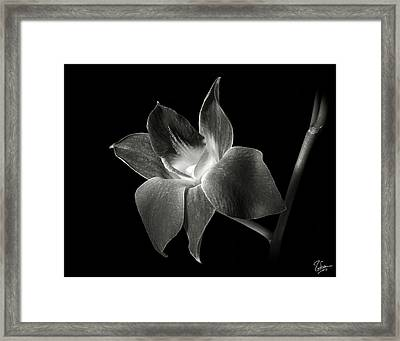 Dendrobium Orchid In Black And White Framed Print