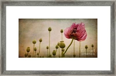 Depth Of Poppy Field Framed Print by Priska Wettstein
